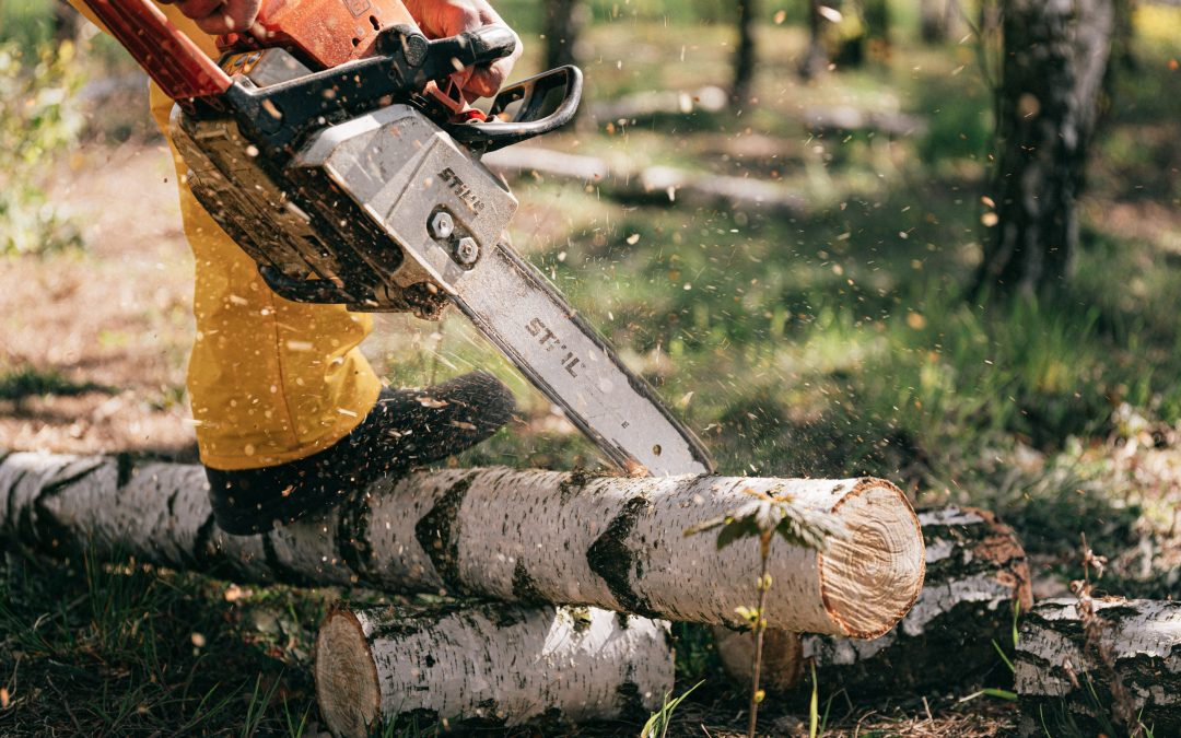 Tree Service Insurance – Everything Needed for 2020
